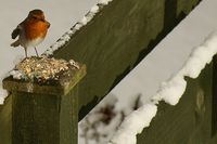 Wing-ed robin