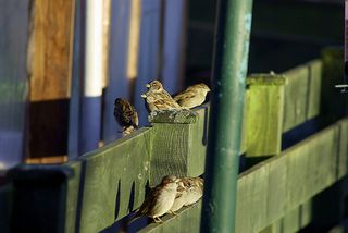 the line for the seed feeder.