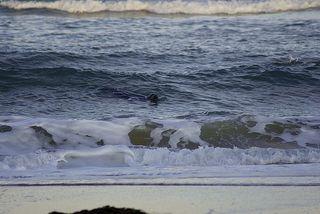 Seal escort as we walked on beach